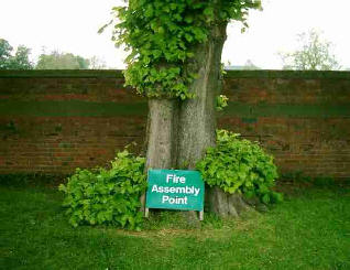 A lime tree. At base is notice ,fire assembly point