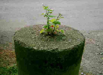 A round concrete pillar with a wild flower growing out the top